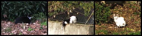 Os gatos do jardim