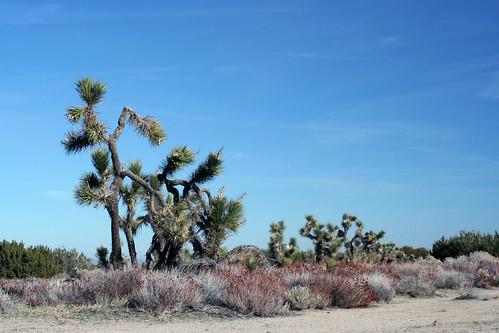 Arthur J. Ripley Desert Woodland State Park