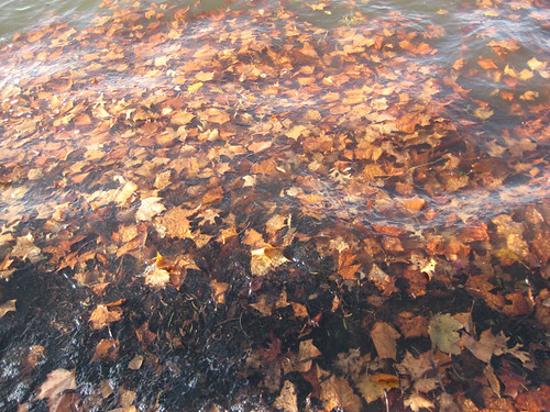 lake leaves