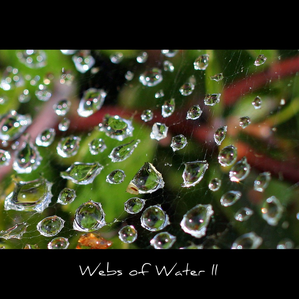 More Webs of Water