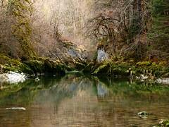 Un peu de féérie ... ** (Titole) Tags: reflection green moss reflet jura mousse friendlychallenges thechallengefactory bourgdesirod titole nicolefaton
