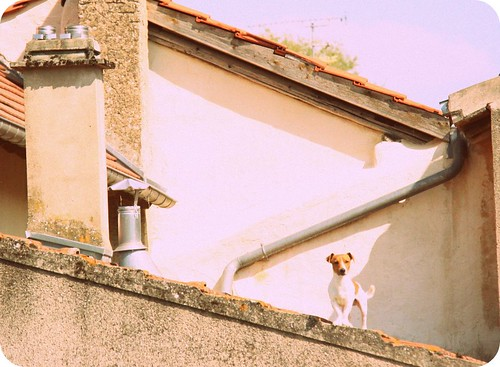 Dog on a Hot Clay Roof
