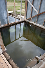 Alvord hot spring