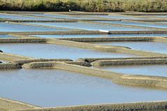 Marais salants de Gurande (Ulli J.) Tags: france frankreich gurande maraissalants paysdelaloire loireatlantique saltevaporationpond meerwassersalinen presquledegurande salzgrten salternsofgurande