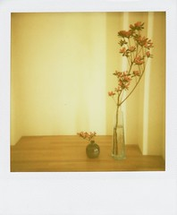on the cabinet in the hall (mamako7070) Tags: flowers stilllife plants flower polaroid azalea instantcamera sun660 instantfilm filmshot aplusphoto theperfectphotographer stilllifeinstantcamera