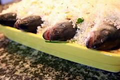 vis in zoutkorst - kokeneten