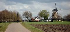De Windhond . (Wouter van Wijngaarden) Tags: holland mill dutch foto nederland thenetherlands windmills mills wouter wout molen soest korenmolen woutervanwijngaarden soesterengh woutvanwijngaarden woutvanwijngaardenbaarn woutervanwijngaardenbaarn