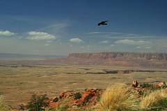 Canyonland (dobieluvrs) Tags: arizona bird beautiful birds canon view desert grandcanyon scenic canyon northernarizona canyonland xti 400d canonxti