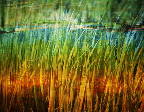 summer_grass