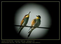 Abejaruos (falconetti2007) Tags: digiscoping camara errores falconetti