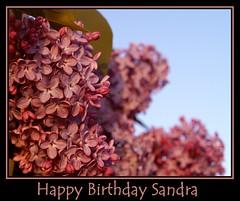Happy birthday Sandra (Kirsten M Lentoft) Tags: sunset purple lilac soe happybirthdaysandra outstandingshots momse2600 diamondclassphotographer flickrdiamond kirstenmlentoft