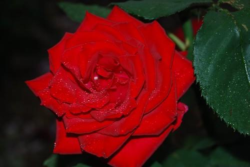 RedRain_20080524_2.jpg
