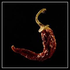 Chili (zane) Tags: stilllife chili