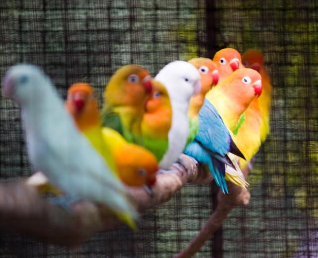 Array of Birds
