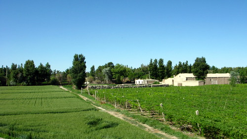 Green at last (approaching Rumen City from the west, Gansu Province, China)