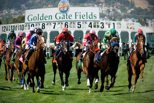 Turf Race at Golden Gate Fields