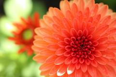 sunflower05