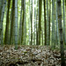 bamboo forest/ 50mm f1.4 ness par youngdoo