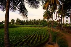 Our Village...