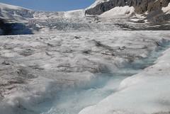 IAN_3699 (peanutian) Tags: glacier athabasca columbiaicefield