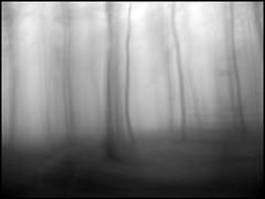 wald-999 (sulamith.sallmann) Tags: wood trees bw mist blur tree misty fog forest landscape blurry nebel foggy spooky mysterious sw landschaft wald bäume foret baum luxemburg challenger xyz nebelig forst unheimlich unschärfe geheimnisvoll geisterhaft sulamithsallmann topofthefog bwartaward saariysqualitypictures