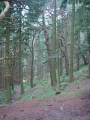 Beautiful forest on the other side of Conic Hill (Mhairi 1975) Tags: westhighlandway drymen rowardennan garadhban conichill