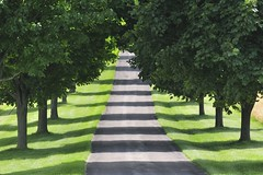 light and shadow, in color (hm-art) Tags: road trees light shadow tree green path driveway naturesfinest artisticexpression grouptripod