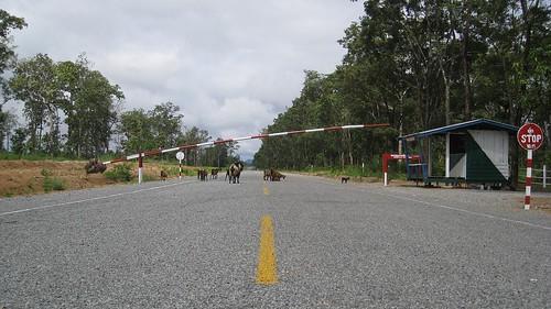 Crossing Cambodias northern border into Laos