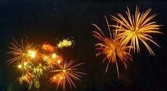 Golden Palms (EpicFireworks) Tags: fireworks bonfire pyro 13g loud pyrotechnics sib epicfireworks