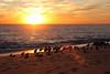 The Sunset Watchers (segamatic) Tags: ocean sunset bird beach animal canon point eos waves seagull pelican malibu dume 40d mywinners tamronaf1750mmf28xrdiiildasphericalif photofaceoffwinner pfogold beautifulworldchallenges