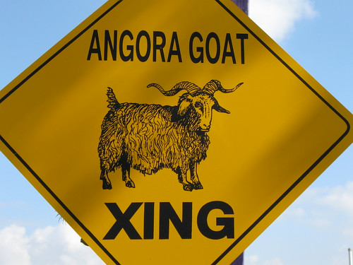 Angora Goat Crossing