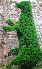 The Bear Necessities at Penshurst Place! (antonychammond) Tags: bear england strange gardens fun kent topiary britain hedge 1001nights historichouse penshurstplace saveearth almostanything excapture theperfectphotographer landscapesdreams spiritofphotography gnneniyisithebestofday