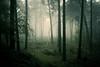 backlight (.ultraviolett) Tags: lighting wood winter light cold münster