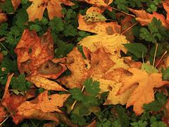 Autumn Detail, 2008