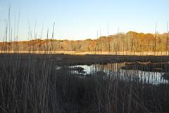 Barn Island Marsh (ledges) Tags: halloween williamscollege barnislandmarsh williamsmysticfall2008