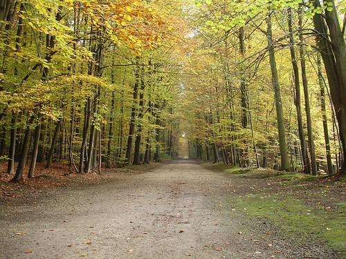 outono belgica
