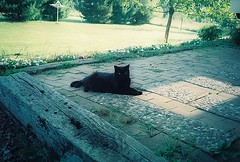 Black cat on patio II (catfilmnoir) Tags: cat blackcat patio 貓 catnipaddicts