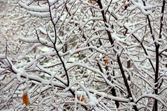 First snow, Almaty, Kazakhstan, 9 November 2008 (Ivan S. Abrams) Tags: autumn winter arizona snow cold weather nikon asia seasons ivan soviet storms abrams kazakhstan scenes nikondigital kazakh steppes almaty astana smörgåsbord tucsonarizona republics 12608 nazarbayev asiacentral onlythebestare ivansabrams trainplanepro nikond300 pimacountyarizona safyan arizonabar arizonaphotographers ivanabrams cochisecountyarizona gettyimagesandtheflickrcollection changeofseasonscentral transcaucasussoviet unionussrformer unionexsoviet ivansafyanabrams arizonalawyers statebarofarizona californialawyers copyrightivansafyanabrams2009allrightsreservedunauthorizeduseprohibitedbylawpropertyofivansafyanabrams unauthorizeduseconstitutestheft thisphotographwasmadebyivansafyanabramswhoretainsallrightstheretoc2009ivansafyanabrams abramsandmcdanielinternationallawandeconomicdiplomacy ivansabramsarizonaattorney ivansabramsbauniversityofpittsburghjduniversityofpittsburghllmuniversityofarizonainternationallawyer