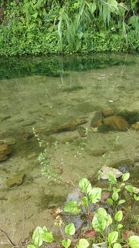 28.池水清涼