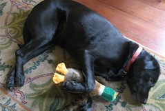 naptime...with duck