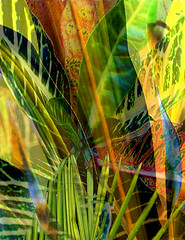 Tropical Rhapsody 2 (N. Charneco) Tags: plants art texture nature colors digital photoshop photos tropical photomontage sensational rhapsody ncharneco altrafotografia