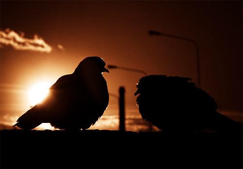 Due piccioni e una ciminiera