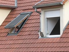 Eve rit...one (petitewebfleur) Tags: store chat strasbourg toit fenêtre toiture chacun velux distinction téléphone téléphoneportable conversationtéléphonique espacevital