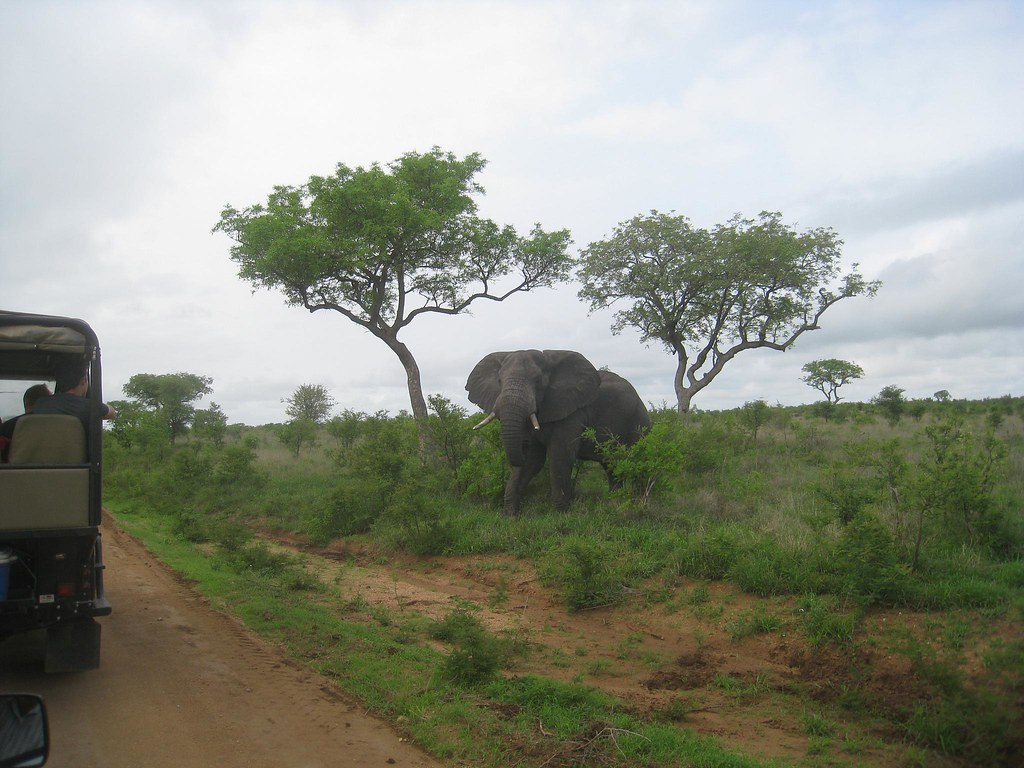Stopping to watch an elephant feed