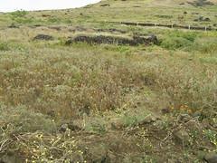 Easter Island, Chile (Peter Musolino) Tags: chile moai easterisland rapanui isladepascua rapa ranoraraku