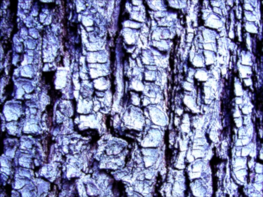 Textures-TreeBark3
