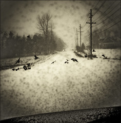 Bird Crossing Ahead (TheWalkinMan) Tags: auto road car birds sepia blackwhite driving snowstorm fineartphotos visiongroup amazingamateur memoriesbook nominationrome2008