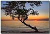 ENCORE! (Fraggle Red) Tags: ocean sunset sun tree beach water sand florida jpeg hdr keybiscayne biscaynebay virginiakey canonefs1785mmf456isusm 3exp anawesomeshot ultimateshot miamidadeco dphdr goldstaraward natureselegantshots