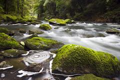 Whargarei Falls river (Ashley Daws) Tags: new bridge cliff tree green water rock forest canon river moss bush stream long exposure ray bank falls zealand filter nd singh 40d whanarei varinduo