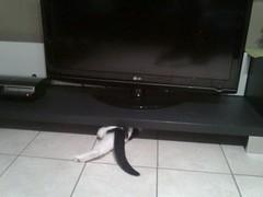 2D CAT (francesca.clemente) Tags: leuven cat francesca felini gatto viaggi gatti smelly cagliari clemente francescaclemente clementefrancesca